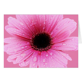 Daisy Pink with Raindrops Card