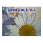 Daisy Rehoboth Beach Postcard