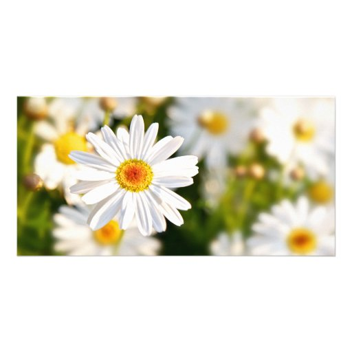Daisy Spring Flowers Customized Photo Card