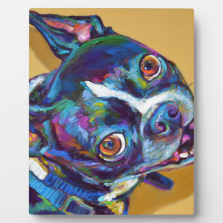 Daisy the Boston Terrier by Robert Phelps Plaque