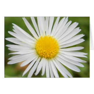 "Daisy ""Thinking of You"" Note Card"