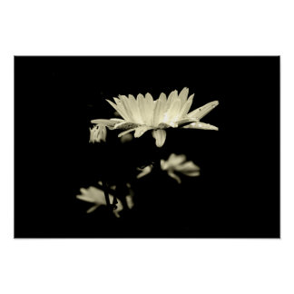 Daisy with Raindrops - Black & White Poster