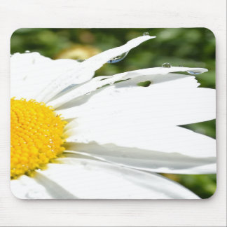 Daisy with Water Drops Mousepads