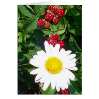 Daisyberries Notecard