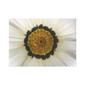 Daisybush White Canvas Print