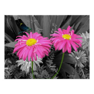 Daisys and Dragonfly Poster