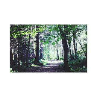 Dalbeattie Forest,  Scotland. Canvas Print