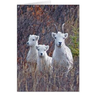 Dall Sheep Ewe with her Lambs at Denali NP Card