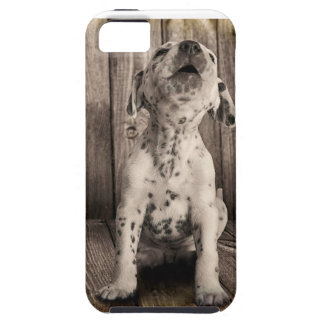 Dalmatian baby case for the iPhone 5