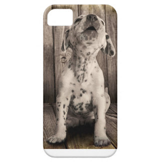 Dalmatian baby iPhone 5 case