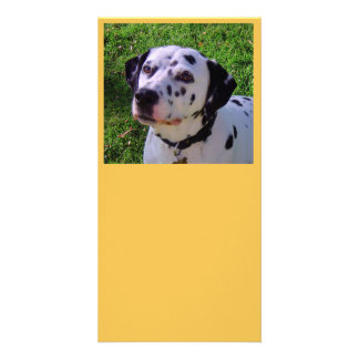 Dalmatian Customized Photo Card