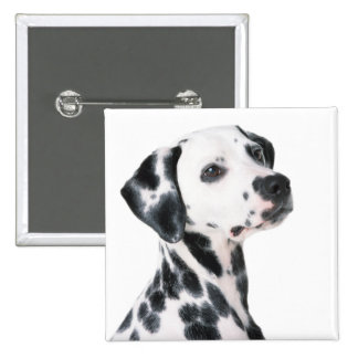Dalmatian dog beautiful photo, gift 2 inch square button