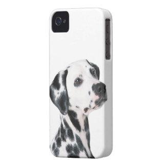 Dalmatian dog beautiful photo, gift iPhone 4 Case-Mate case