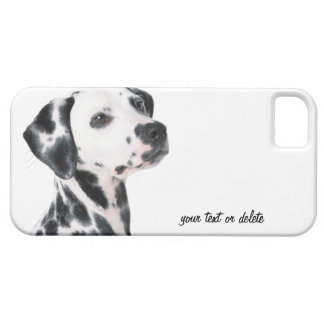 Dalmatian dog beautiful photo, gift iPhone 5 covers