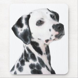 Dalmatian dog beautiful photo, gift mouse pad