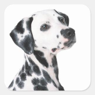 Dalmatian dog beautiful photo, gift square sticker