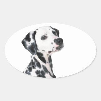 Dalmatian dog beautiful photo, gift oval sticker
