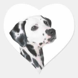 Dalmatian dog beautiful photo, gift heart sticker