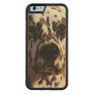 Dalmatian Dog Carved® Maple iPhone 6 Bumper