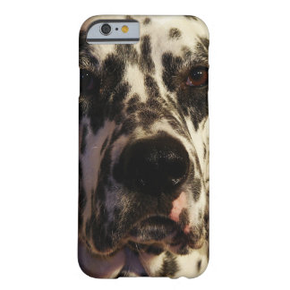 Dalmatian Dog Barely There iPhone 6 Case