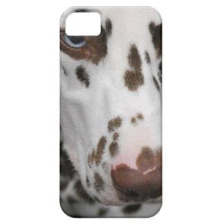Dalmatian Dog iPhone 5 Cases