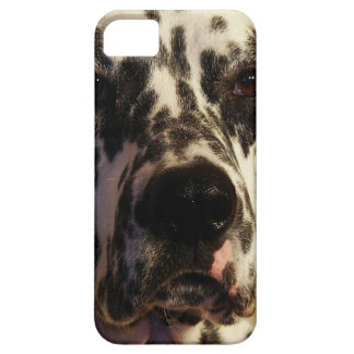 Dalmatian Dog iPhone 5 Cover