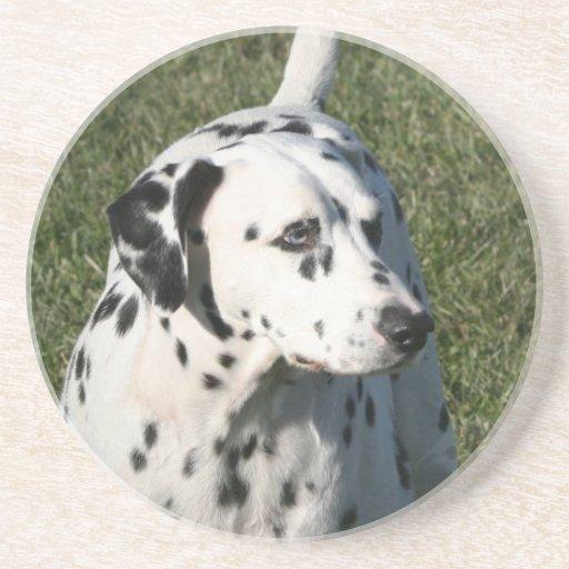 Dalmatian Dog Coasters