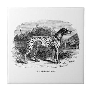 Dalmatian Dog - Dalmatians and Dogs Template Ceramic Tiles