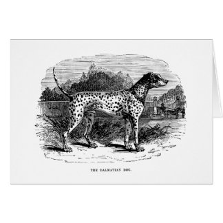 Dalmatian Dog - Dalmatians and Dogs Template Note Card