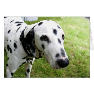 Dalmatian Dog Notecard Note Card