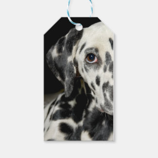 Dalmatian dog, pretty lookking gift tags