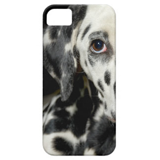 Dalmatian dog, pretty lookking iPhone 5 case
