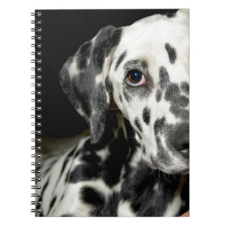 Dalmatian dog, pretty lookking notebook