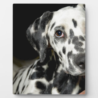 Dalmatian dog, pretty lookking plaque