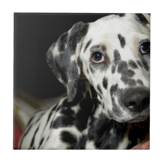 Dalmatian dog, pretty lookking tile