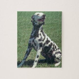 Dalmatian Dog Puzzle
