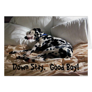 Dalmatian Down Stay Card