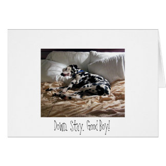 Dalmatian.  Down.  Stay.  Good Boy! Card