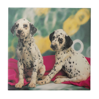 Dalmatian Puppies Tile