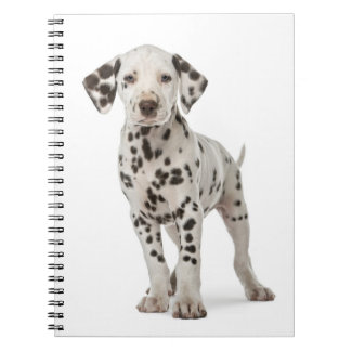 Dalmatian Puppy Dog - Black And White Spots Notebook