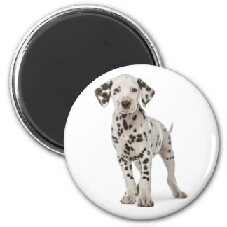 Dalmatian Puppy Dog - Black & White Spotted Pup Magnet