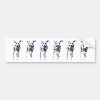 Dalmatian puppy dog bumper sticker, gift idea car bumper sticker