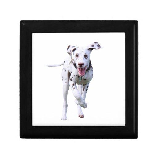 Dalmatian puppy dog jewelry box trinket box