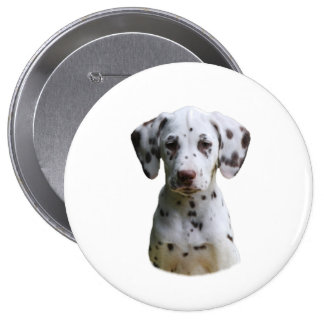 Dalmatian puppy dog photo pinback buttons