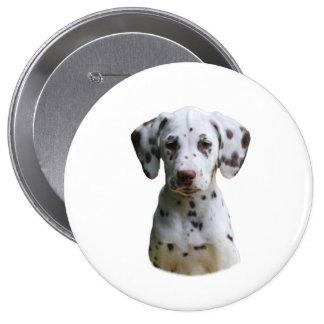 Dalmatian puppy dog photo pinback buttons