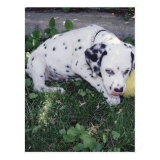 Dalmatian Puppy with a Ball Postcard