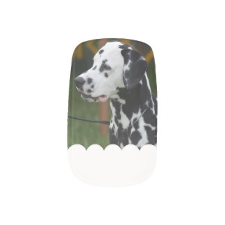 Dalmatian with Spots Nails Stickers
