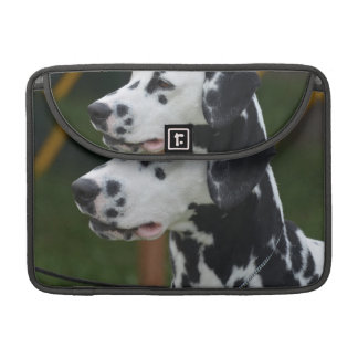 Dalmatian with Spots Sleeves For MacBooks