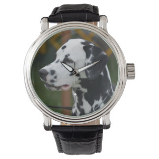 Dalmatian with Spots Wristwatches