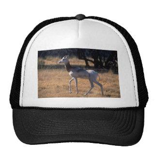 Dama Gazelle Mesh Hat